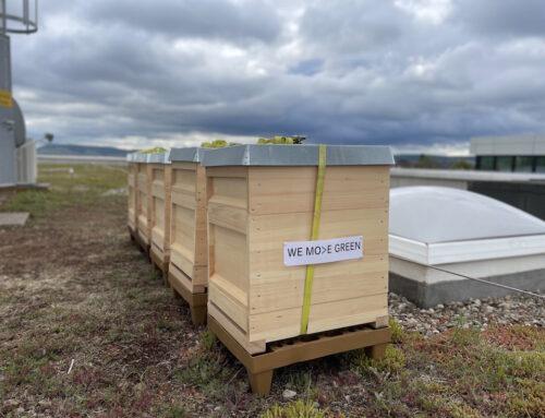 Daimler Mobility dà il benvenuto alle api a Stoccarda